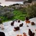 Tratar de 55 gatos numa ilha grega - o que lhe parece?